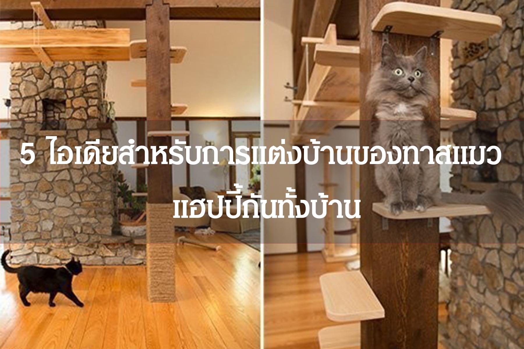 5 ไอเดียสำหรับการแต่งบ้านของทาสแมว แฮปปี้กันทั้งบ้าน