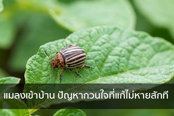 แมลงเข้าบ้าน ปัญหากวนใจที่แก้ไม่หายสักที Trendy Home แต่งบ้าน ปรับคอนโด